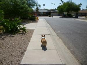 Cassie-off-leash