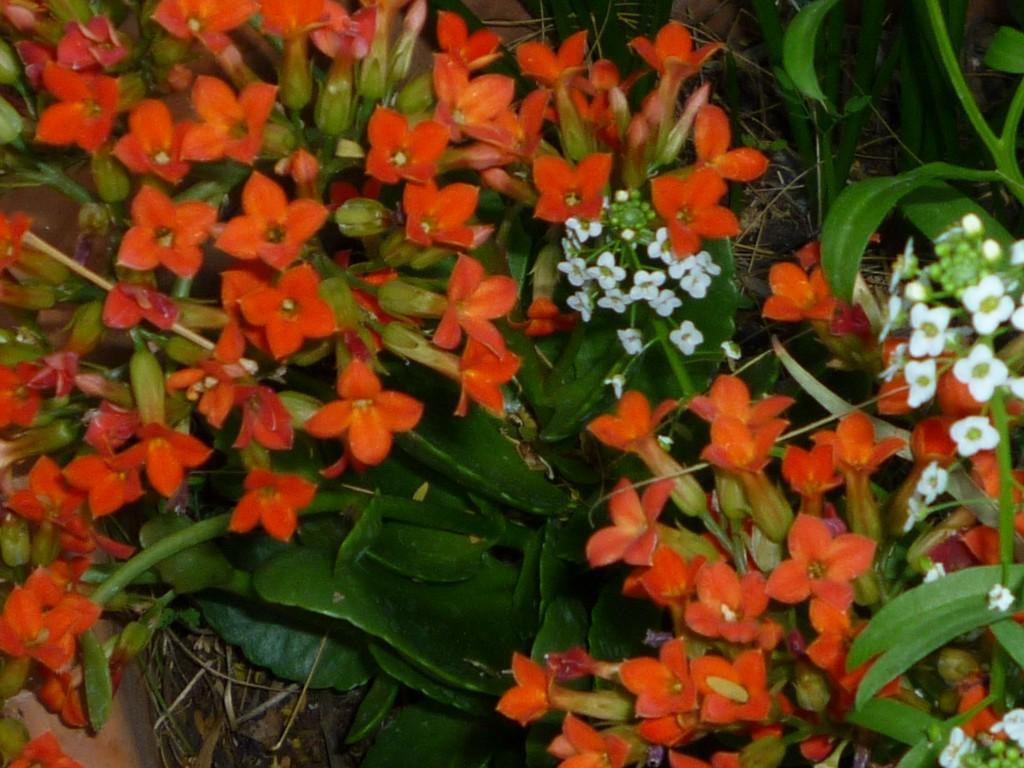 Spring 2016 flowers 6