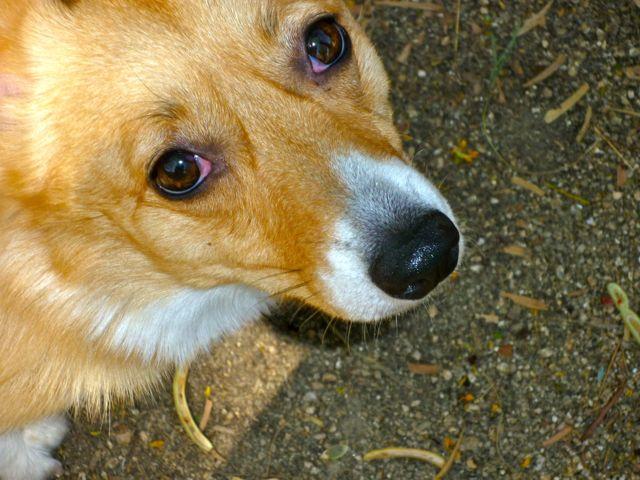 Puppy peering