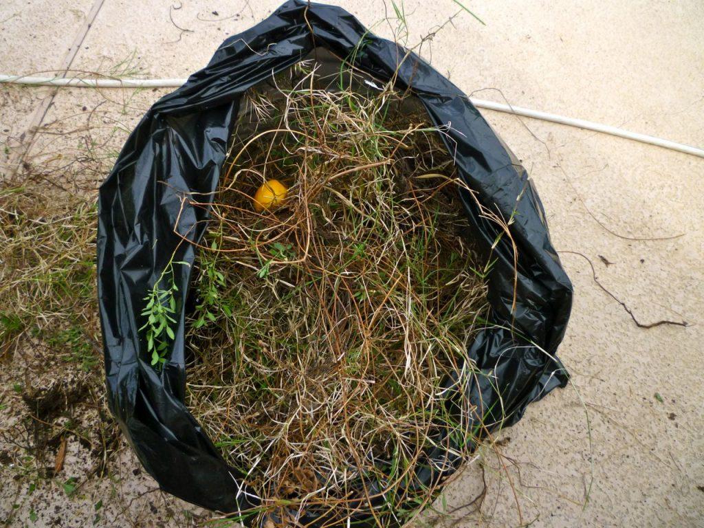 bermudgrassbag