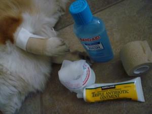 Dog-Bandaging