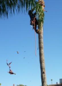 Palm-tree-debris