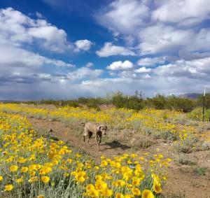 Wildflowers&Dog